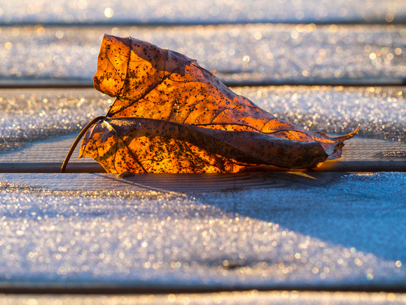 Leaf at Flaskebekk vel brygge